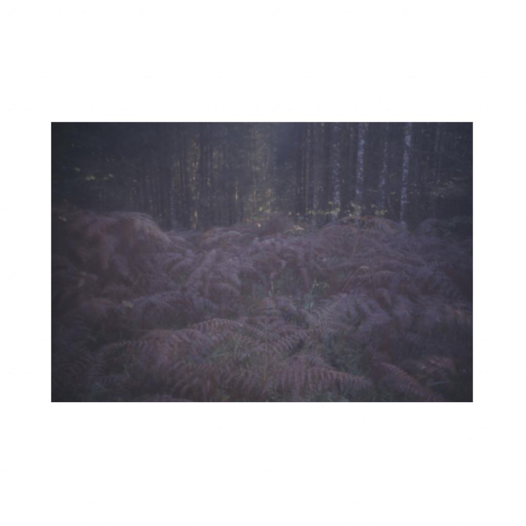 Bojan Salaj, Kočevski rog, iz serije Interjerji III, 2008.