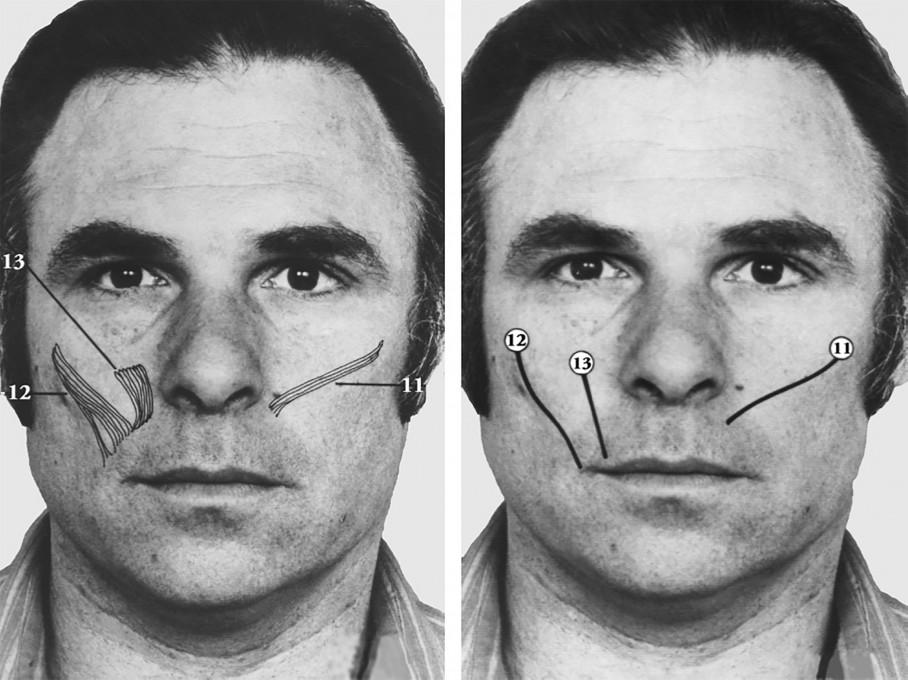 Slika 7.1: Paul Ekman, et al., Sistem kodiranja obrazne mimike (Facial Action Coding System, FACS), 2002.