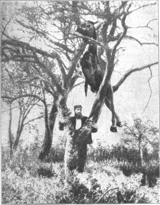 Slika 4. Neobičajen učinek granate. Grafika. (Ilustrirani glasnik 1914, št. 52, 588).