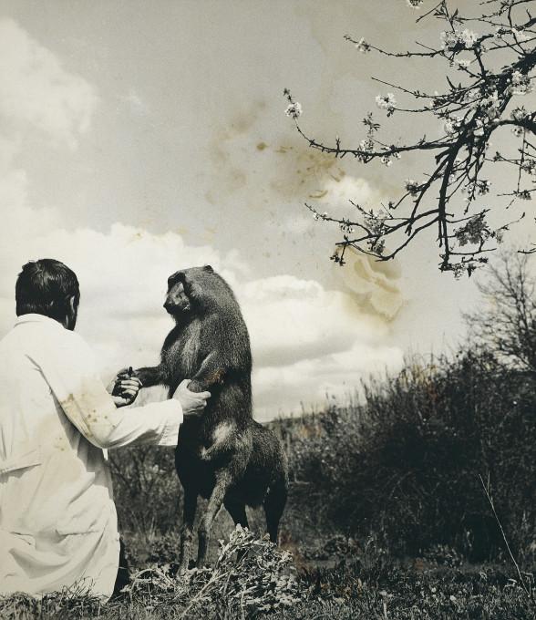 Joan Fontcuberta (s Perom Formiguerom), Cercopithecus icarocornu, iz serije Favna (Fauna), 1987.