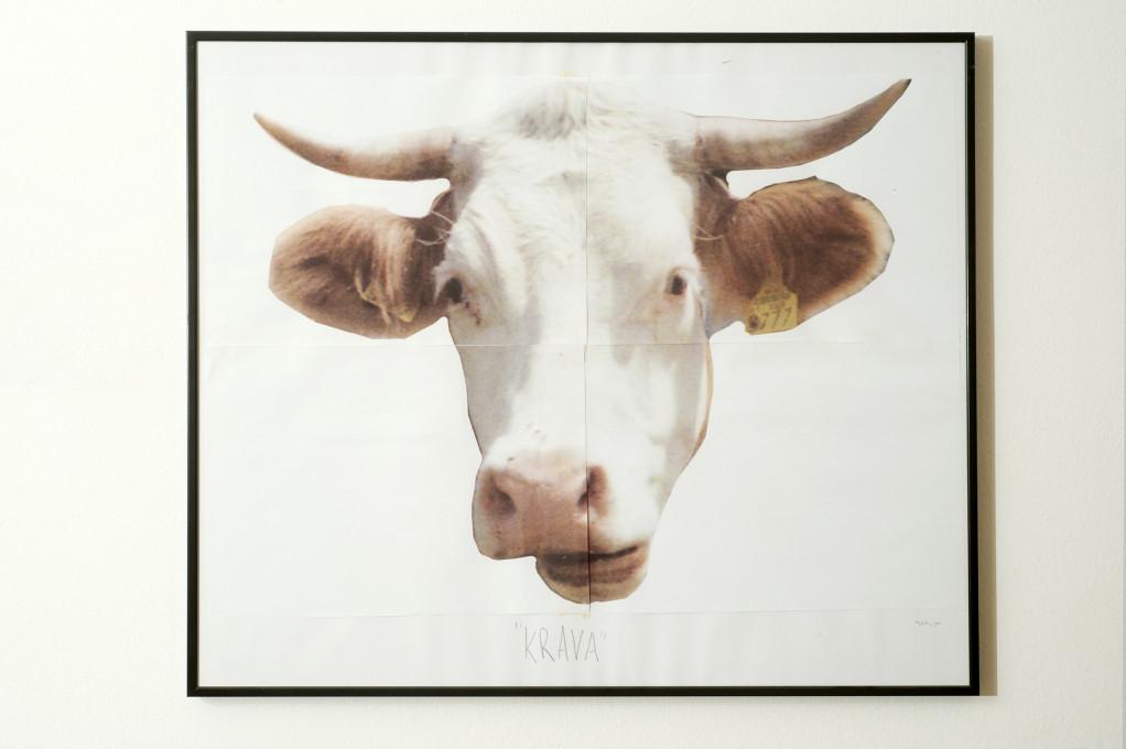 Bojan Mijatović, Kravji eksperiment (Cow Experiment), 2014. Z dovoljenjem avtorja.
