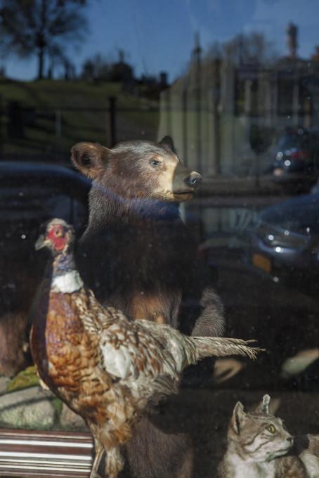 Montse Morcate, Delavnica za gačenje živali Johna Youngaitisa, ki se nahaja zraven pokopališča, je edina tovrstna delavnica v New Yorku.
