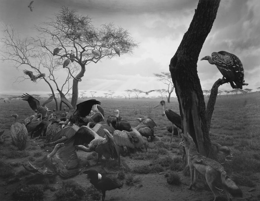 Hiroshi Sugimoto, Hijena-Šakal-Jastreb (Hyena-Jackal-Vulture), 1976. Želatino-srebrna fotografija. Z dovoljenjem Galerije Koyanagi. © Hiroshi Sugimoto