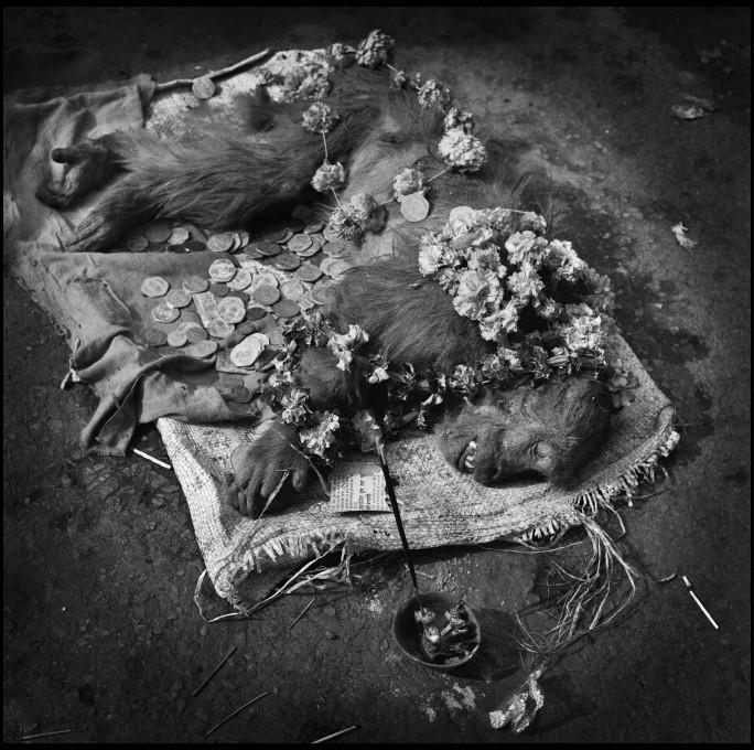 Michael Ackerman, Mrtva opica (Dead Monkey), Varanasi, 1994. Z dovoljenjem avtorja.