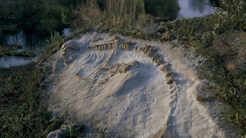 Joan Fontcuberta: Hydropitecus of Cerro de San Vicente, from Sirens series, 2006.