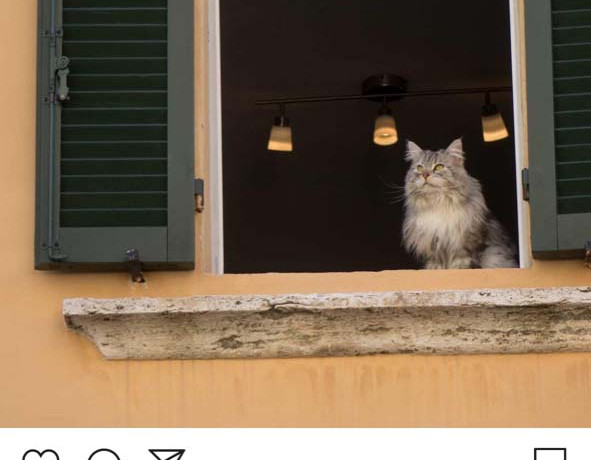 Lenart Kučić: Animal Internets.