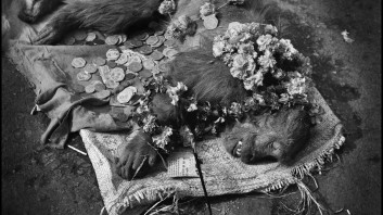 Michael Ackerman: Dead Monkey, Varanasi, 1994. Courtesy of the author.