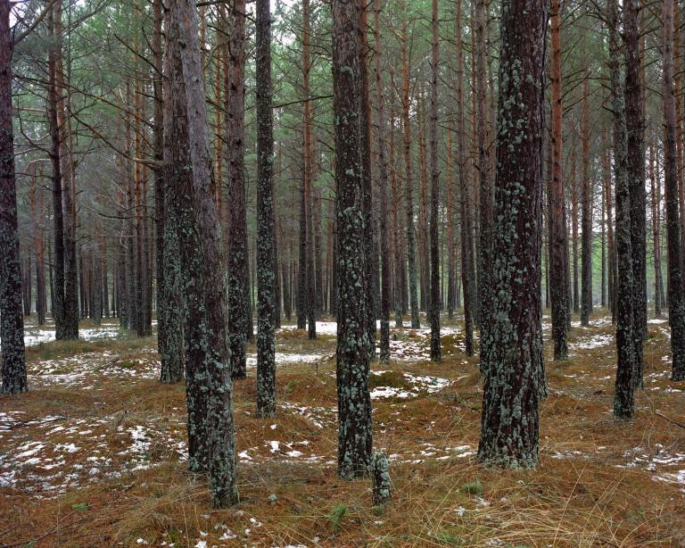 Simon Menner: iz serije Kamuflaža, 2010. Ostrostrelec na desni od sredine slike. Pod zeleno ponjavo je vidno ustje strelnega orožja.