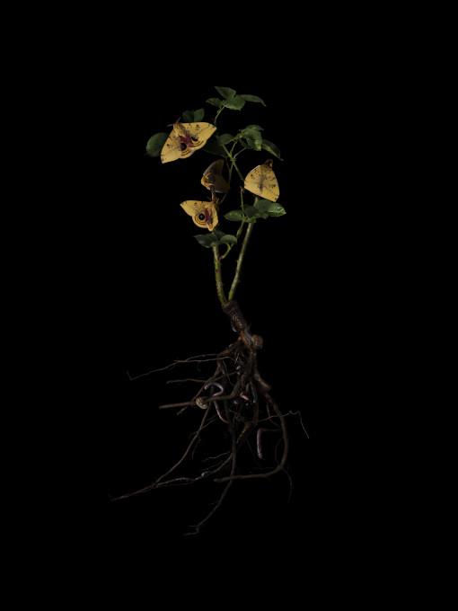 Jasmina Cibic, Ustanovni očetje (Rosa Helmut Kohl), C-tisk, 100 cm × 80 cm, 2020.