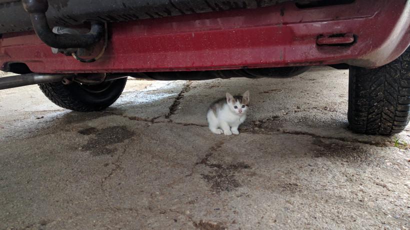 Lenart Kučić: Fotografije mačk.