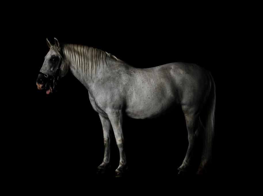 Jasmina Cibic, Lipizzaner 085 Favory Canissa - Naepolitano Thaisa XL, C-tisk, 100 cm × 80 cm, 2020.